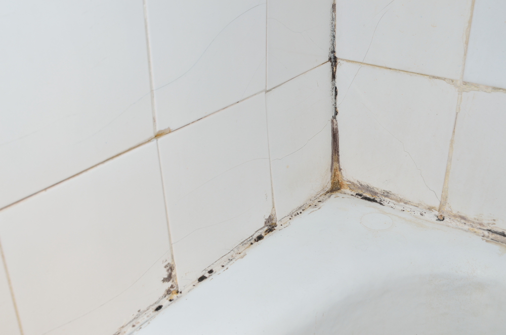 Coolhouseplans blog blog archive how to deal with mold - How to deal with mold ...